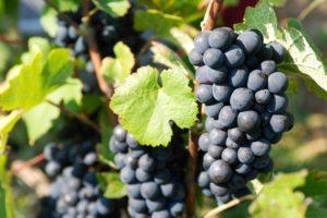 Bouteille Mandois dans les vignes