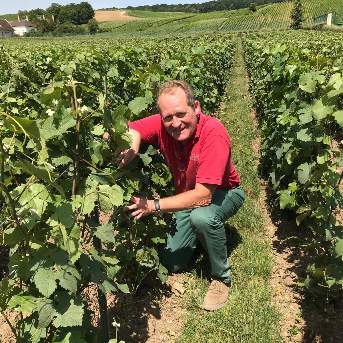 Claude mandois vignes juin