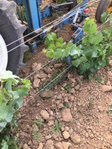 labour charrue vignoble mandois