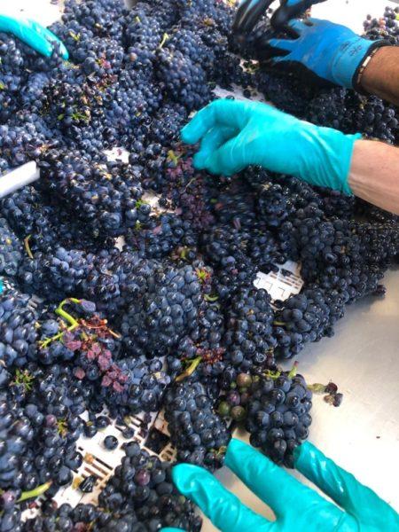 tri manuel raisins vin rouge pierry